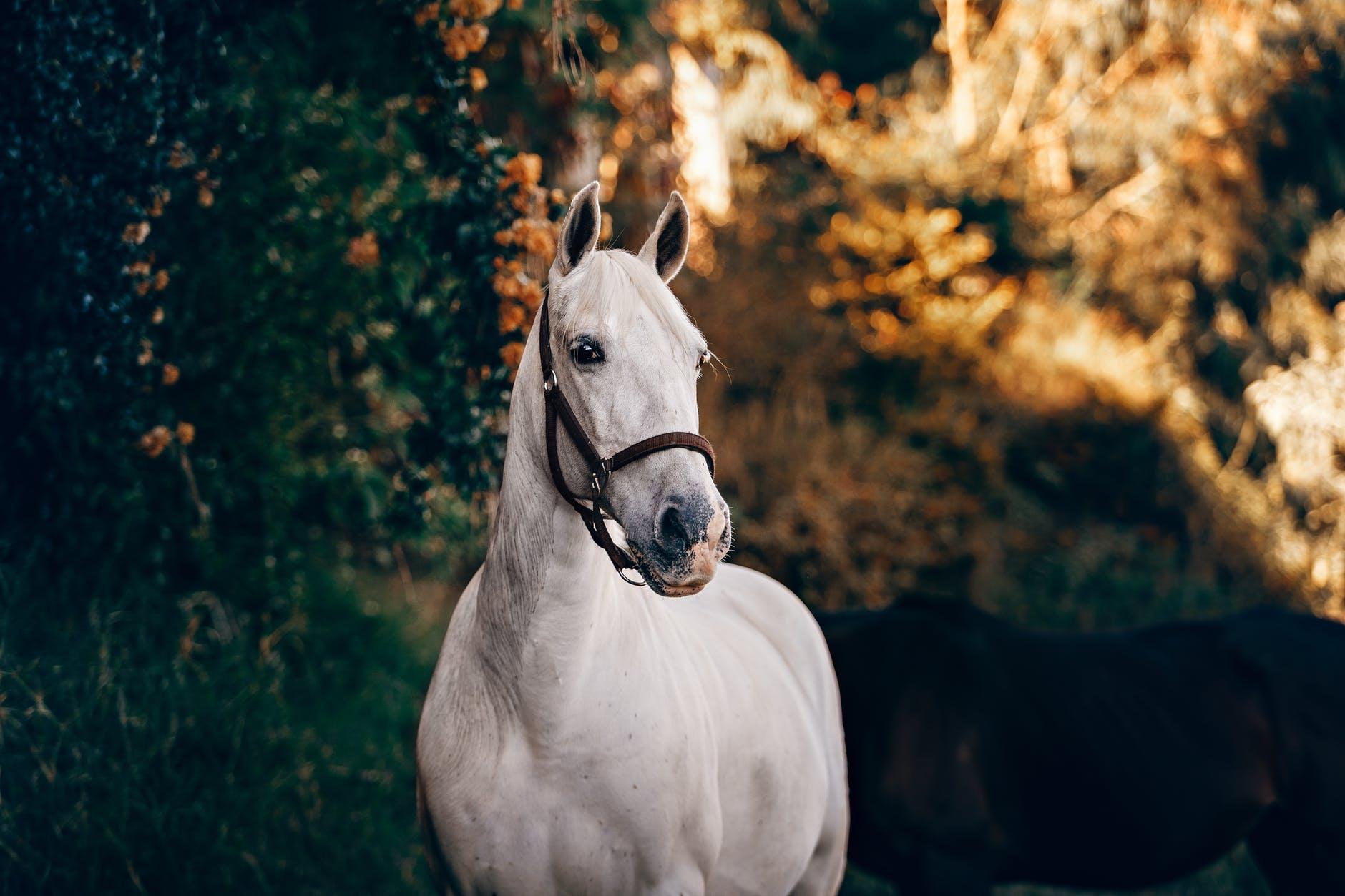 Izjade ar zirgu